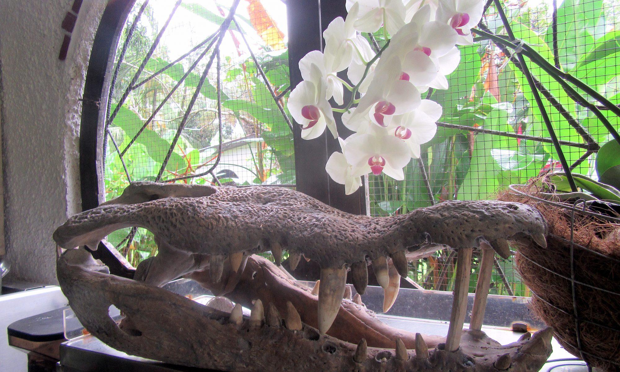 Krokodil Tempisque