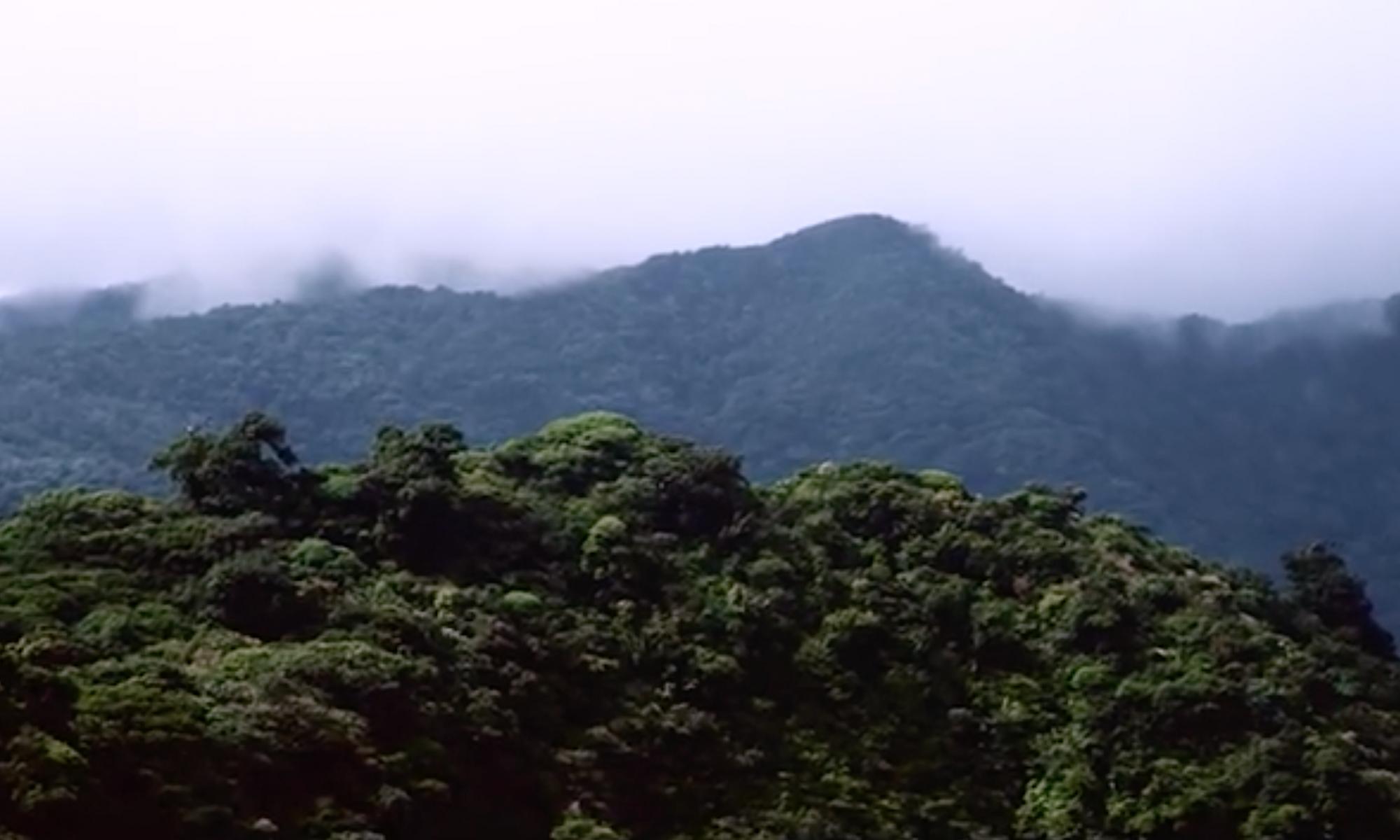 Amazonas Artikel Natur